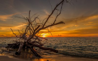 Denis Island – Jewell of the Seychelles